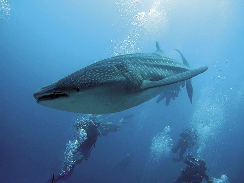Malediven: Das exklusivste Taucherlebnis der Welt