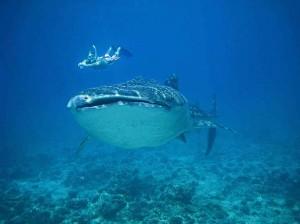 Conrad Maldives_MWSRP