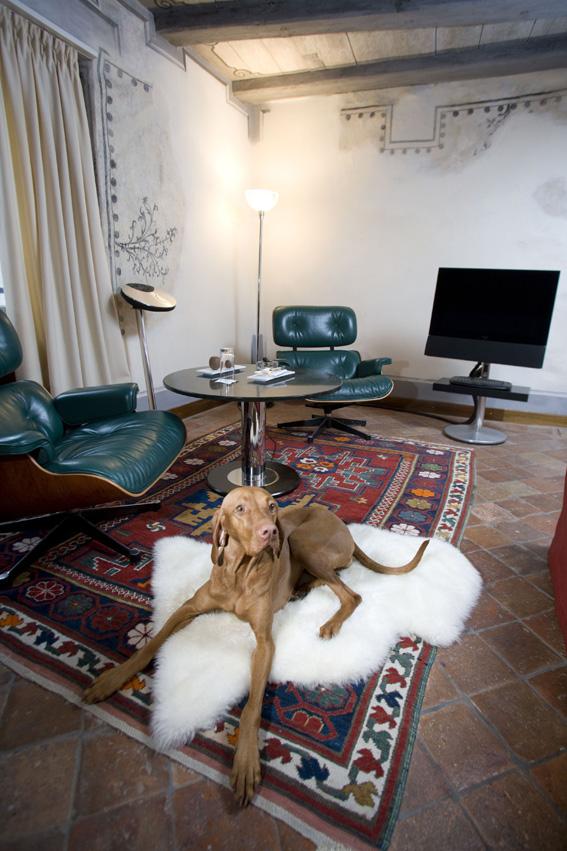 """Vierbeiner im Luxushotel: Widder Hotel bietet """"VID""""-Service"""